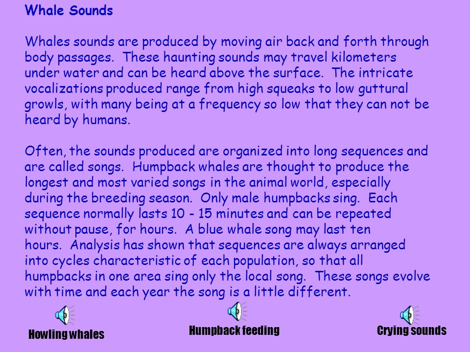 Whale Sounds Whales sounds are produced by moving air back and forth through body passages.