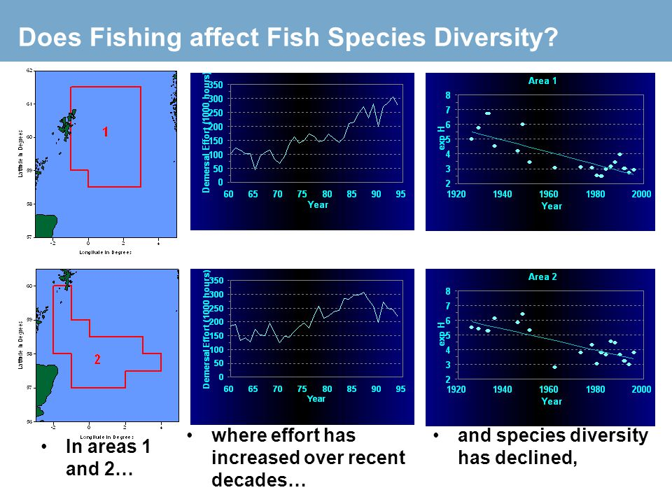 Does Fishing affect Fish Species Diversity? In areas 1 and 2… where effort has increased over recent decades… and species diversity has declined,