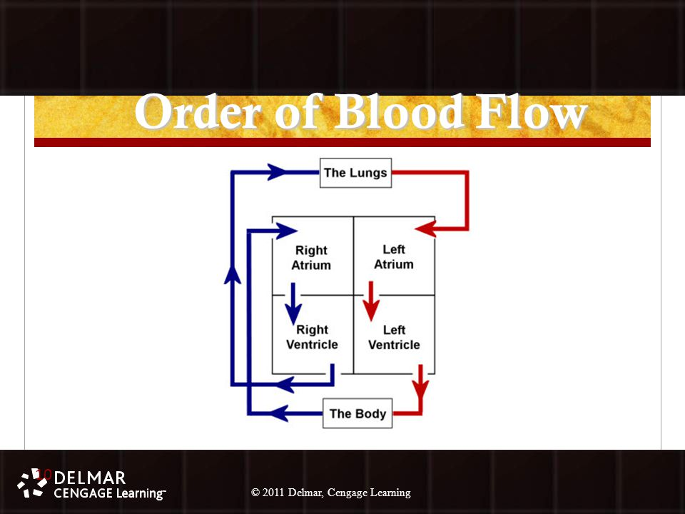 © 2010 Delmar, Cengage Learning 10 © 2011 Delmar, Cengage Learning Order of Blood Flow 10
