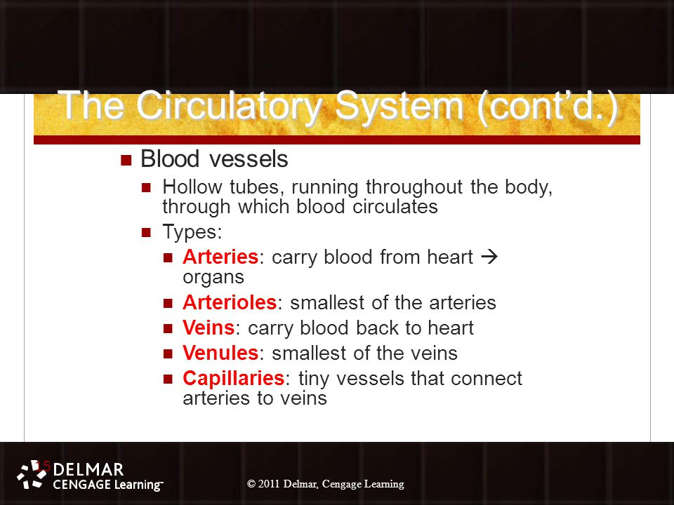 © 2010 Delmar, Cengage Learning 15 © 2011 Delmar, Cengage Learning The Circulatory System (cont'd.) Blood vessels Hollow tubes, running throughout the body, through which blood circulates Types: Arteries: carry blood from heart  organs Arterioles: smallest of the arteries Veins: carry blood back to heart Venules: smallest of the veins Capillaries: tiny vessels that connect arteries to veins 15