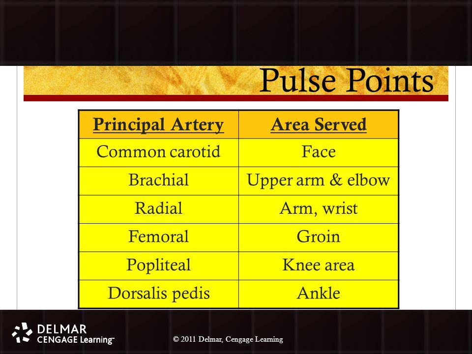 © 2010 Delmar, Cengage Learning 17 © 2011 Delmar, Cengage Learning Pulse Points Principal ArteryArea Served Common carotidFace BrachialUpper arm & elbow RadialArm, wrist FemoralGroin PoplitealKnee area Dorsalis pedisAnkle