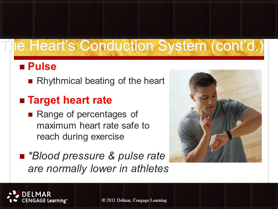 © 2010 Delmar, Cengage Learning 23 © 2011 Delmar, Cengage Learning The Heart's Conduction System (cont'd.) Pulse Rhythmical beating of the heart Target heart rate Range of percentages of maximum heart rate safe to reach during exercise *Blood pressure & pulse rate are normally lower in athletes 23