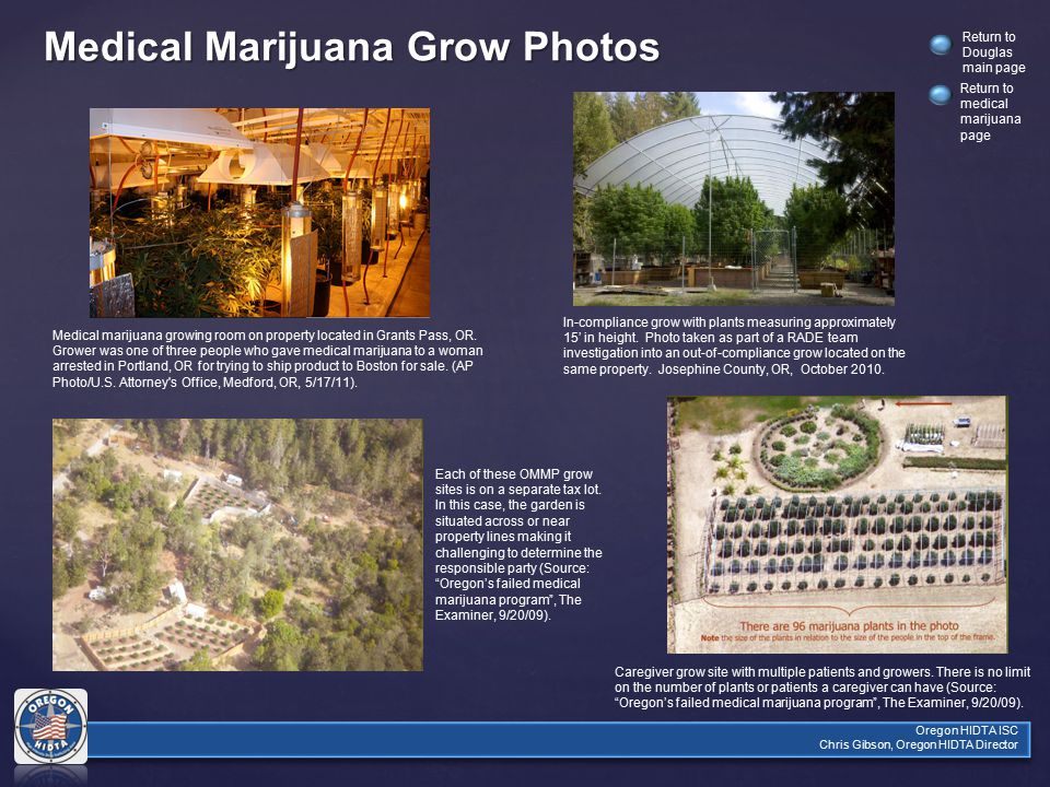 Oregon HIDTA ISC Chris Gibson, Oregon HIDTA Director Return to Douglas main page Medical Marijuana Grow Photos Medical marijuana growing room on property located in Grants Pass, OR.