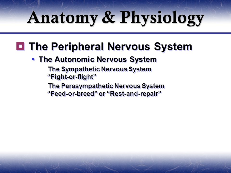 Anatomy & Physiology  The Peripheral Nervous System  The Autonomic Nervous System  The Sympathetic Nervous System Fight-or-flight  The Parasympathetic Nervous System Feed-or-breed or Rest-and-repair  The Peripheral Nervous System  The Autonomic Nervous System  The Sympathetic Nervous System Fight-or-flight  The Parasympathetic Nervous System Feed-or-breed or Rest-and-repair