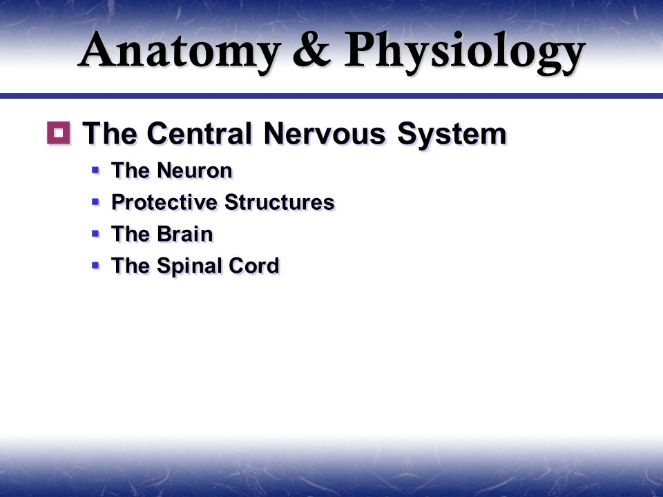 Anatomy & Physiology  The Central Nervous System  The Neuron  Protective Structures  The Brain  The Spinal Cord  The Central Nervous System  The Neuron  Protective Structures  The Brain  The Spinal Cord