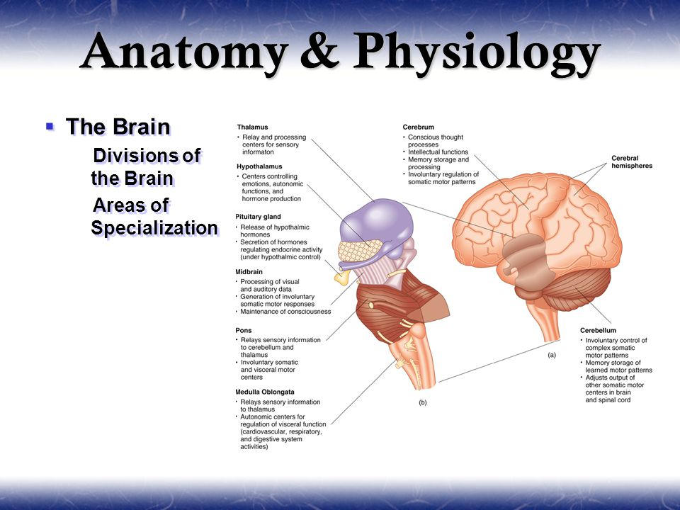 anatomy and physiology of sport Anatomy & physiology[enter course] overview: you probably have a general understanding of how your body works but do you fully comprehend how all of the intricate functions and systems of the human body work together to keep you healthy.