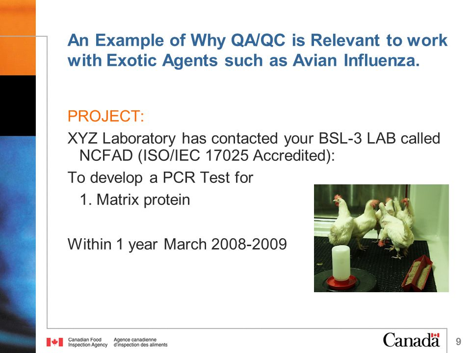 9 An Example of Why QA/QC is Relevant to work with Exotic Agents such as Avian Influenza.