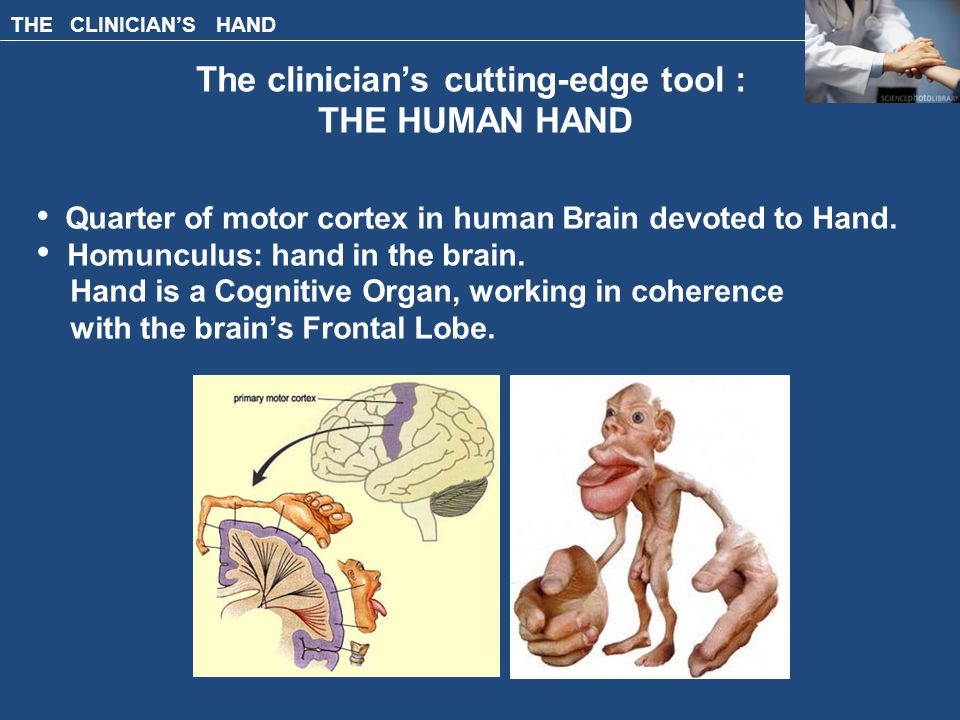 THE CLINICIAN'S HAND The clinician's cutting-edge tool : THE HUMAN HAND Quarter of motor cortex in human Brain devoted to Hand.