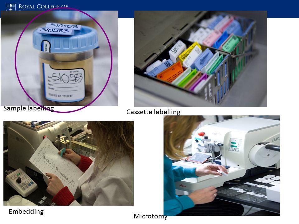 Microscopic analysis and interpretation