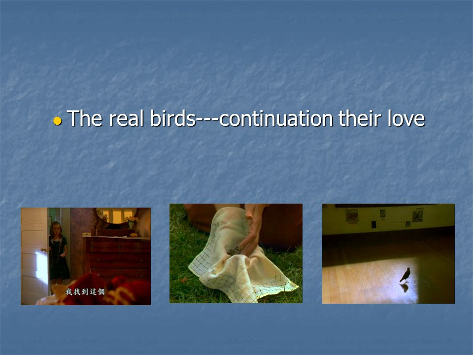 The real birds---continuation their love The real birds---continuation their love