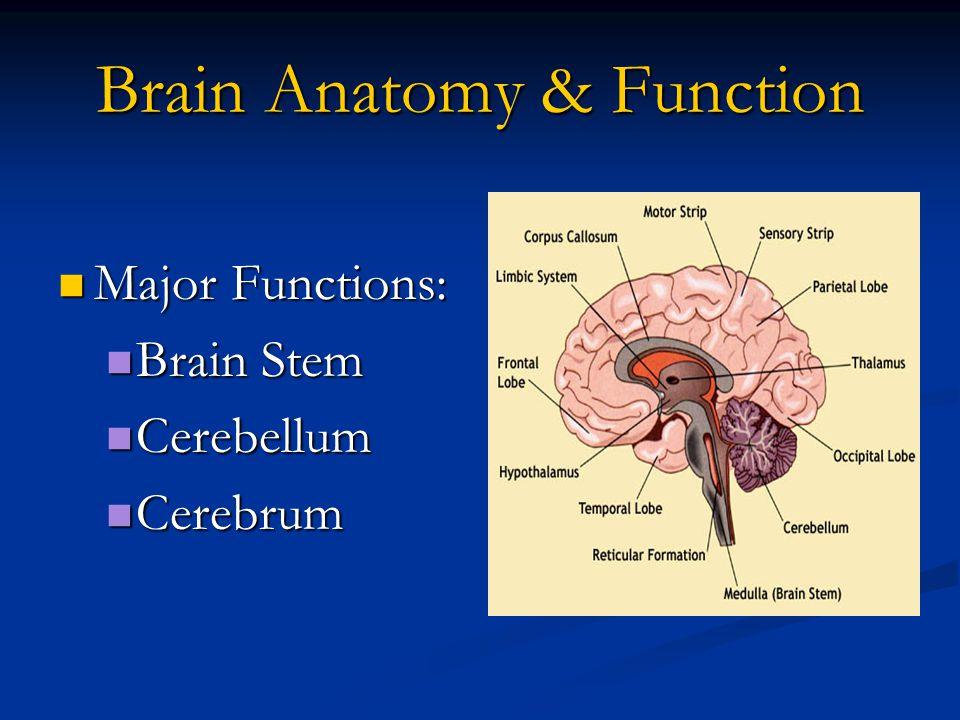 Brain Anatomy & Function Major Functions: Major Functions: Brain Stem Brain Stem Cerebellum Cerebellum Cerebrum Cerebrum