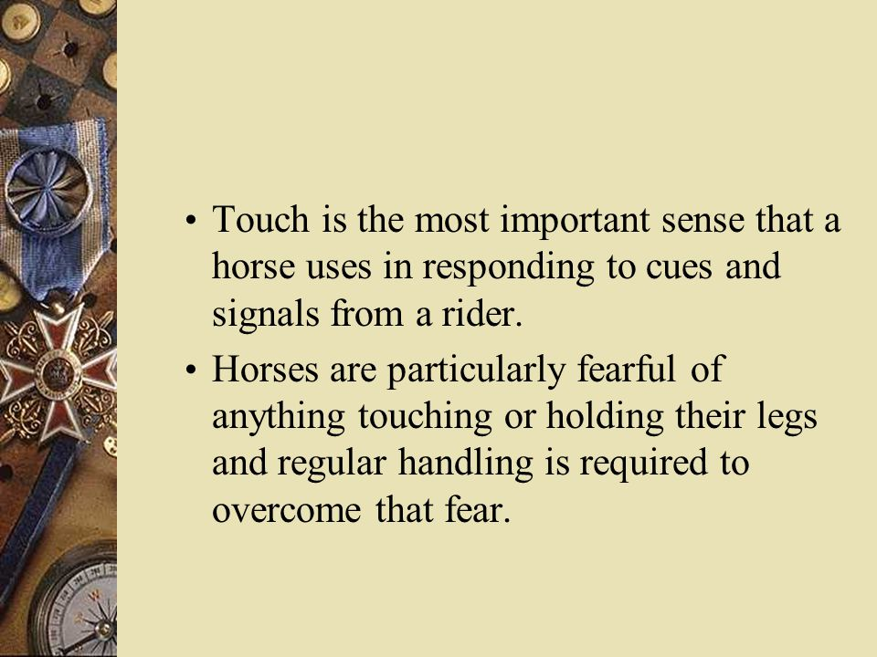 Touch is the most important sense that a horse uses in responding to cues and signals from a rider.