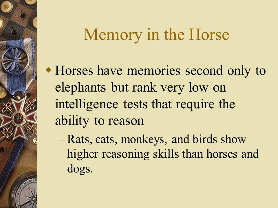Memory in the Horse  Horses have memories second only to elephants but rank very low on intelligence tests that require the ability to reason – Rats, cats, monkeys, and birds show higher reasoning skills than horses and dogs.