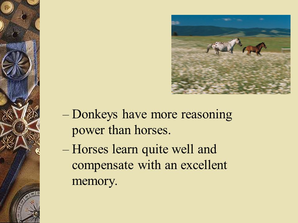 – Donkeys have more reasoning power than horses.