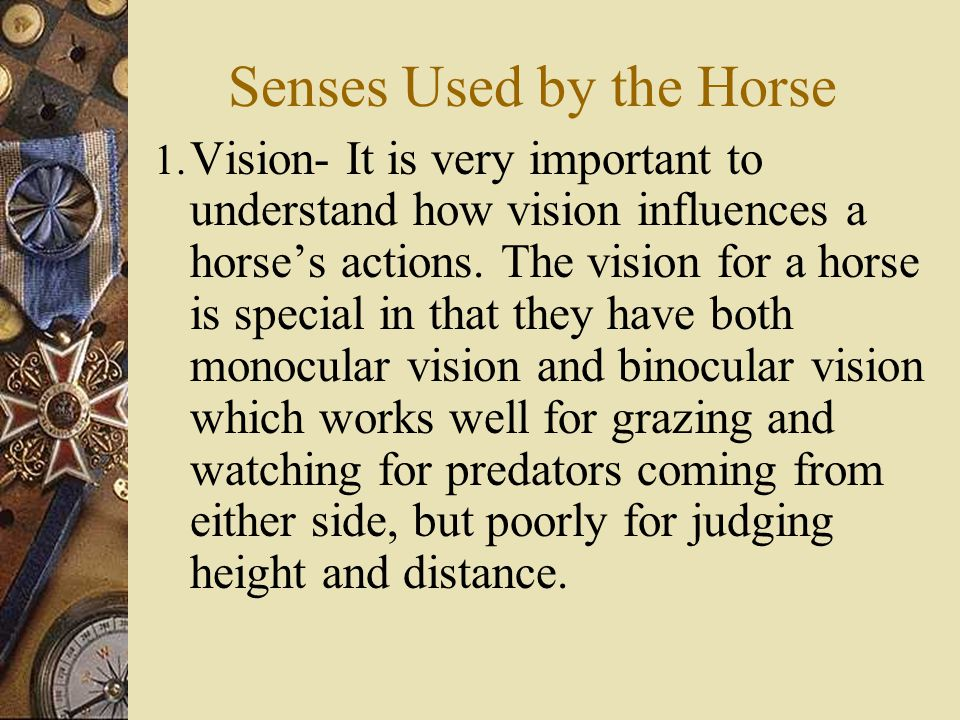 Interpreting Equine Behavior  Features to watch: – The ears, eyes, nose and mouth give many indications of what a horse is feeling.