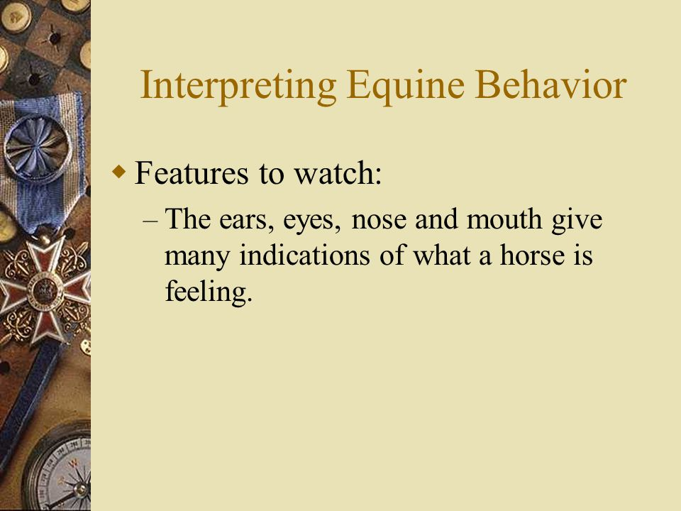 Interpreting Equine Behavior  Features to watch: – The ears, eyes, nose and mouth give many indications of what a horse is feeling.
