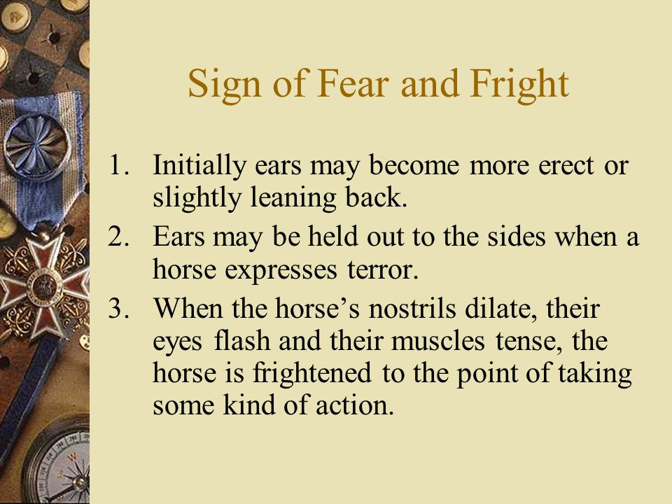 Sign of Fear and Fright 1.Initially ears may become more erect or slightly leaning back.