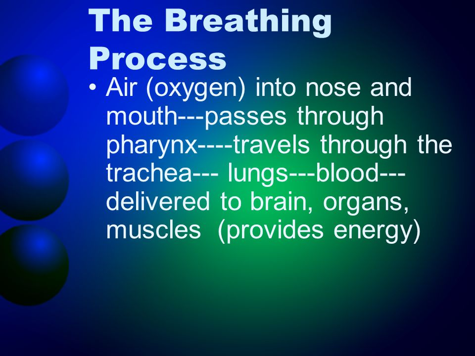 The Breathing Process Air (oxygen) into nose and mouth---passes through pharynx----travels through the trachea--- lungs---blood--- delivered to brain,