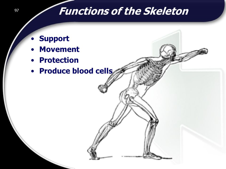 97 Functions of the Skeleton Support Movement Protection Produce blood cells 97 © 2002 Abertay Nationwide Training