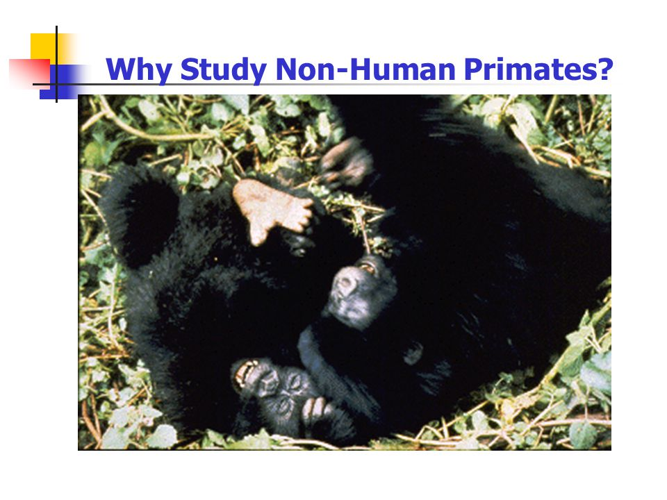 Why Study Non-Human Primates?