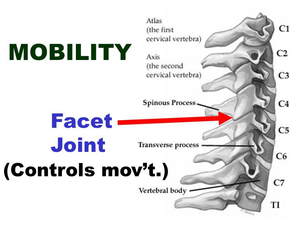Spinous Process Facet Joint Vert. Body Disc
