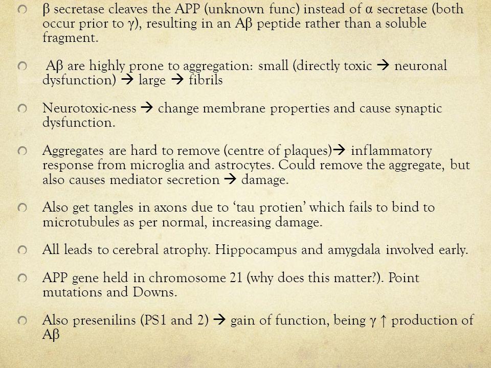 β secretase cleaves the APP (unknown func) instead of α secretase (both occur prior to γ ), resulting in an A β peptide rather than a soluble fragment.