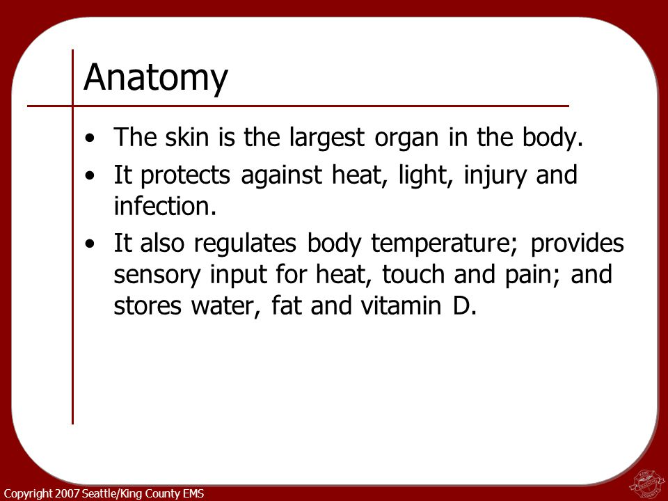 Copyright 2007 Seattle/King County EMS Anatomy The skin is the largest organ in the body. It protects against heat, light, injury and infection. It al