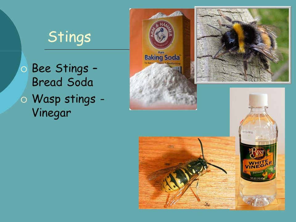 Stings  Bee Stings – Bread Soda  Wasp stings - Vinegar