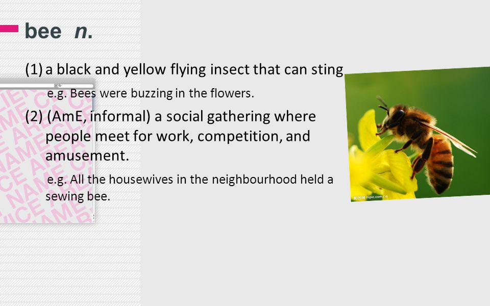 bee n. (1)a black and yellow flying insect that can sting e.g. Bees were buzzing in the flowers. (2) (AmE, informal) a social gathering where people m