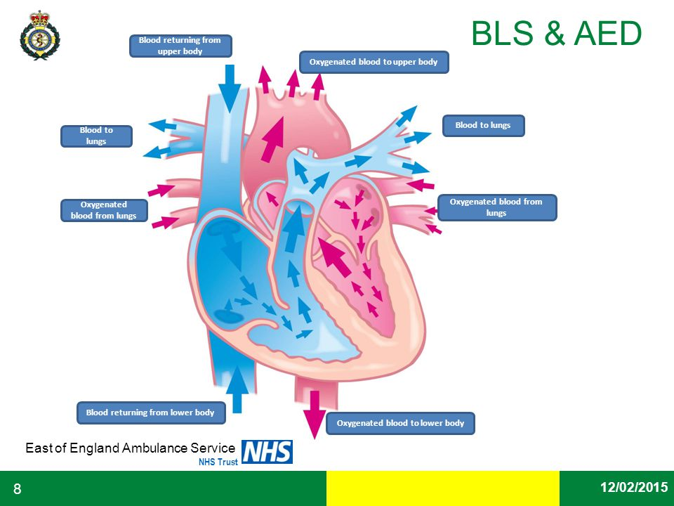 Date East of England Ambulance Service NHS Trust BLS & AED 12/02/2015 8 Oxygenated blood to upper body Blood to lungs Oxygenated blood from lungs Oxyg