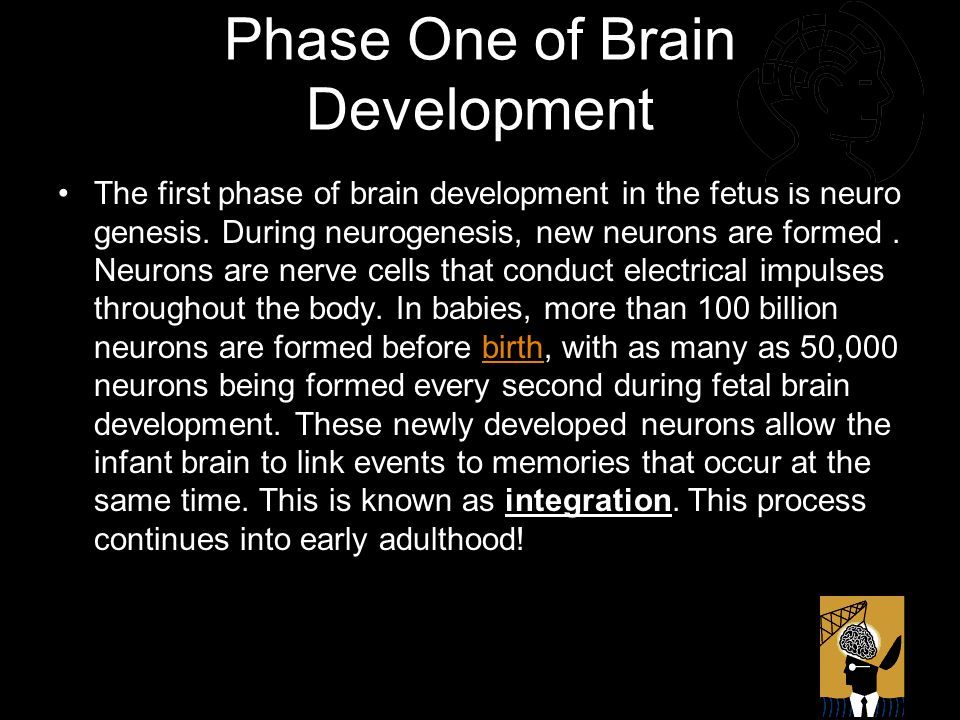 Phase One of Brain Development The first phase of brain development in the fetus is neuro genesis.