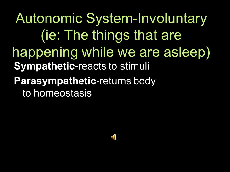 Autonomic System-Involuntary (ie: The things that are happening while we are asleep) Sympathetic-reacts to stimuli Parasympathetic-returns body to homeostasis