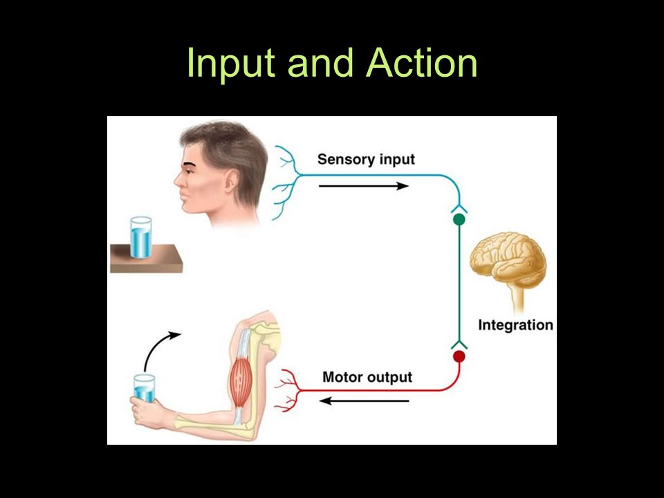 Input and Action