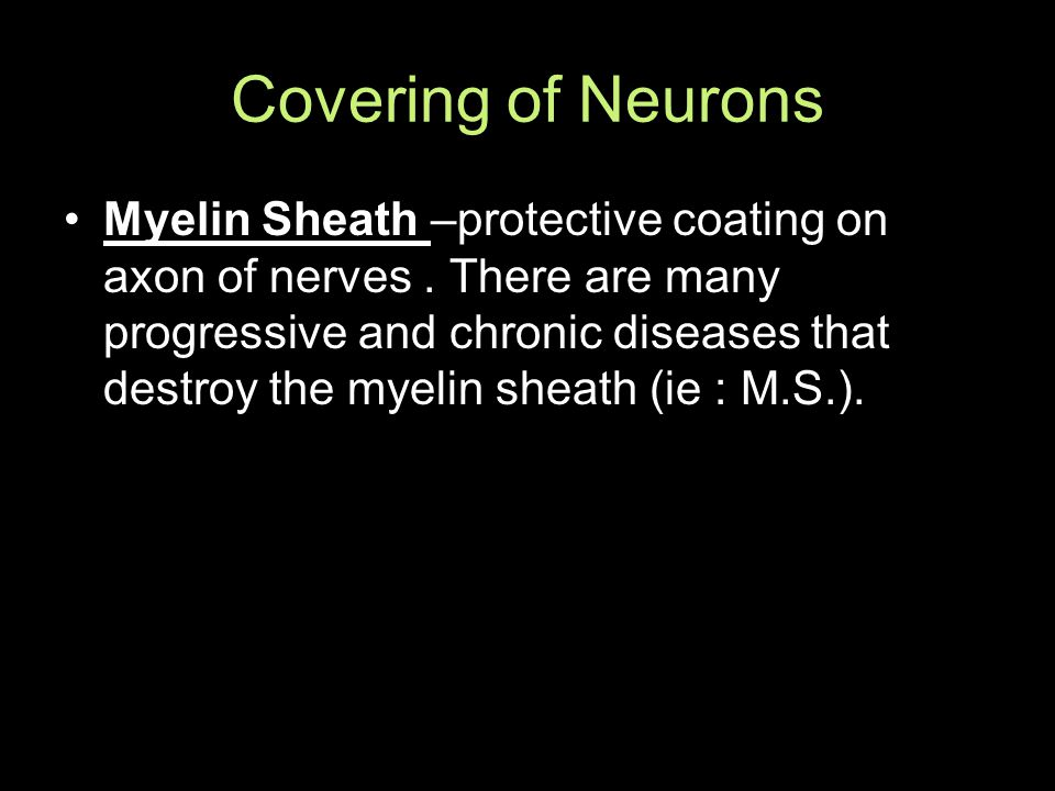Covering of Neurons Myelin Sheath –protective coating on axon of nerves.