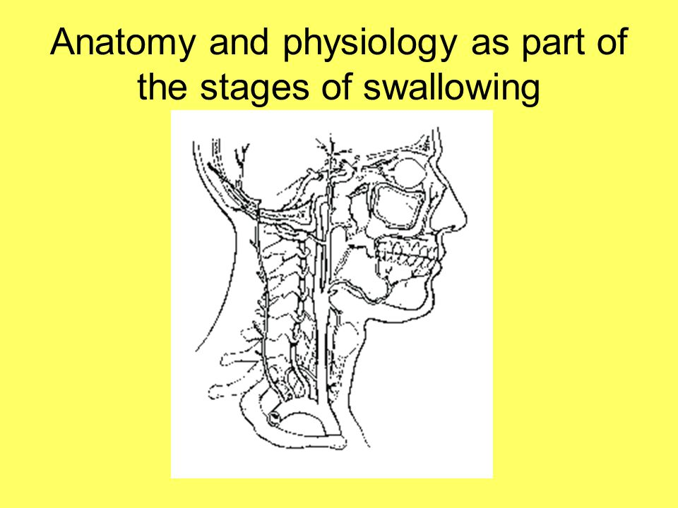 Anatomy and physiology as part of the stages of swallowing
