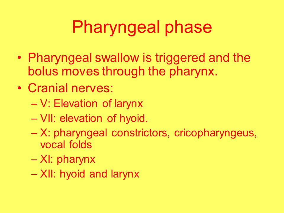 Pharyngeal phase Pharyngeal swallow is triggered and the bolus moves through the pharynx.