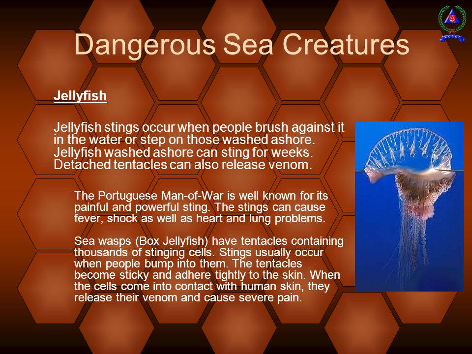 Dangerous Sea Creatures Jellyfish Jellyfish stings occur when people brush against it in the water or step on those washed ashore.