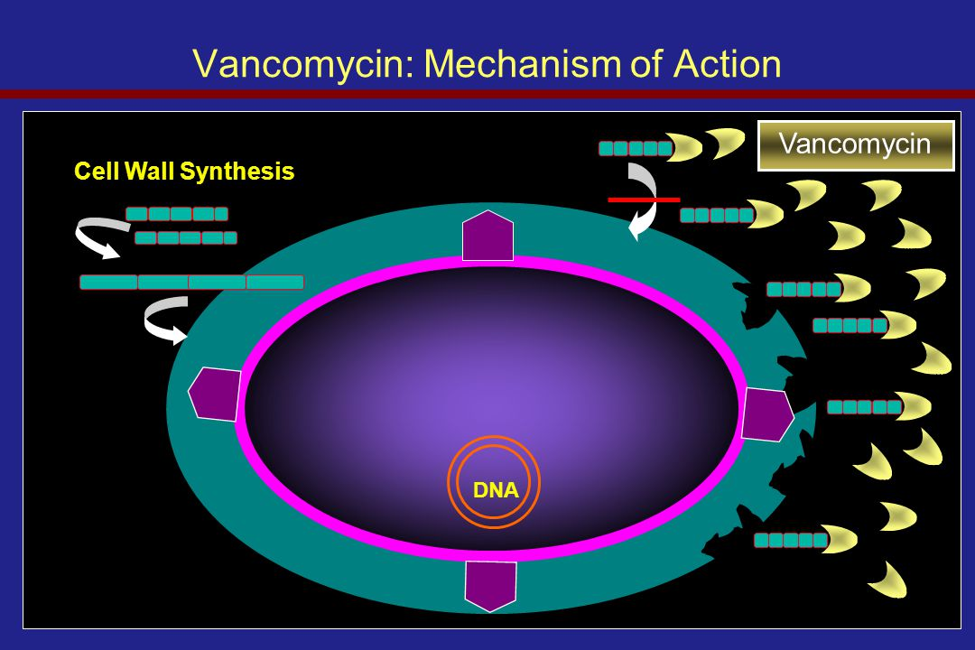 Vancomycin: Mechanism of Action Vancomycin Cell Wall Synthesis DNA