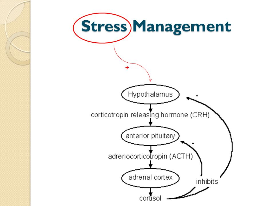 Stress Management +