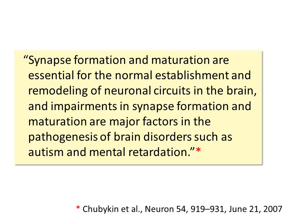 Synapse formation and maturation are essential for the normal establishment and remodeling of neuronal circuits in the brain, and impairments in synapse formation and maturation are major factors in the pathogenesis of brain disorders such as autism and mental retardation. * * Chubykin et al., Neuron 54, 919–931, June 21, 2007