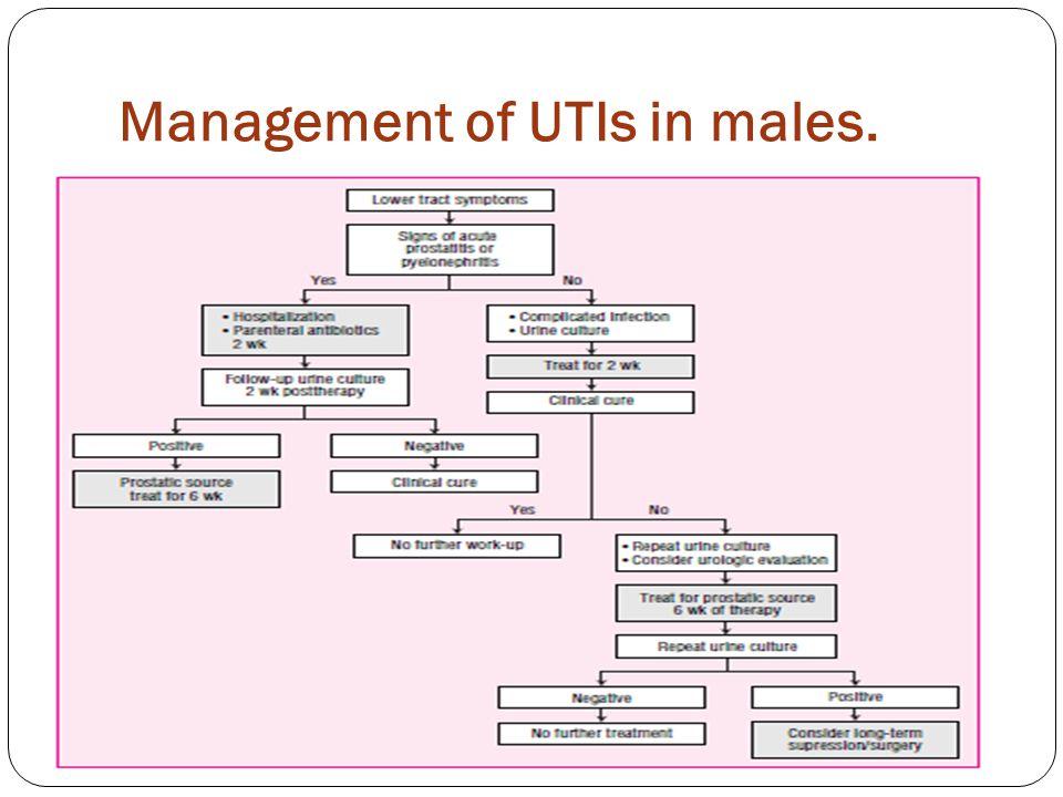 Management of UTIs in males.