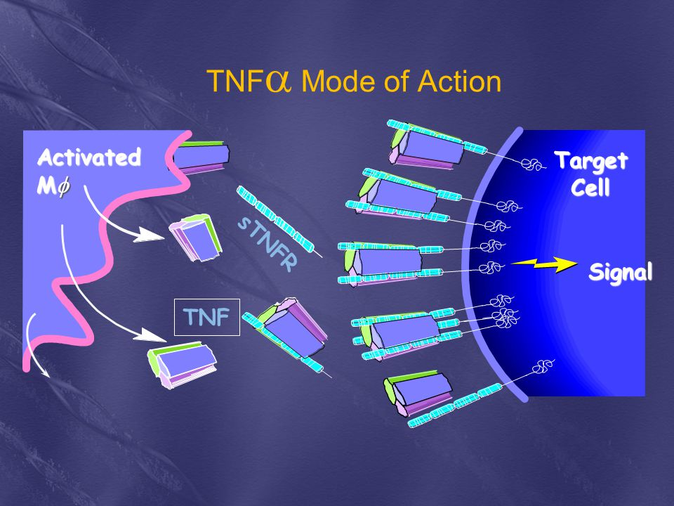 sTNFR TNF  Mode of Action Activated M  TNF