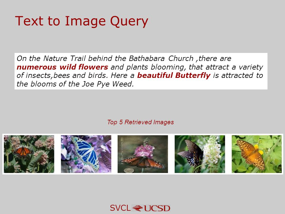 SVCL Top 5 Retrieved Images Text to Image Query On the Nature Trail behind the Bathabara Church,there are numerous wild flowers and plants blooming, that attract a variety of insects,bees and birds.