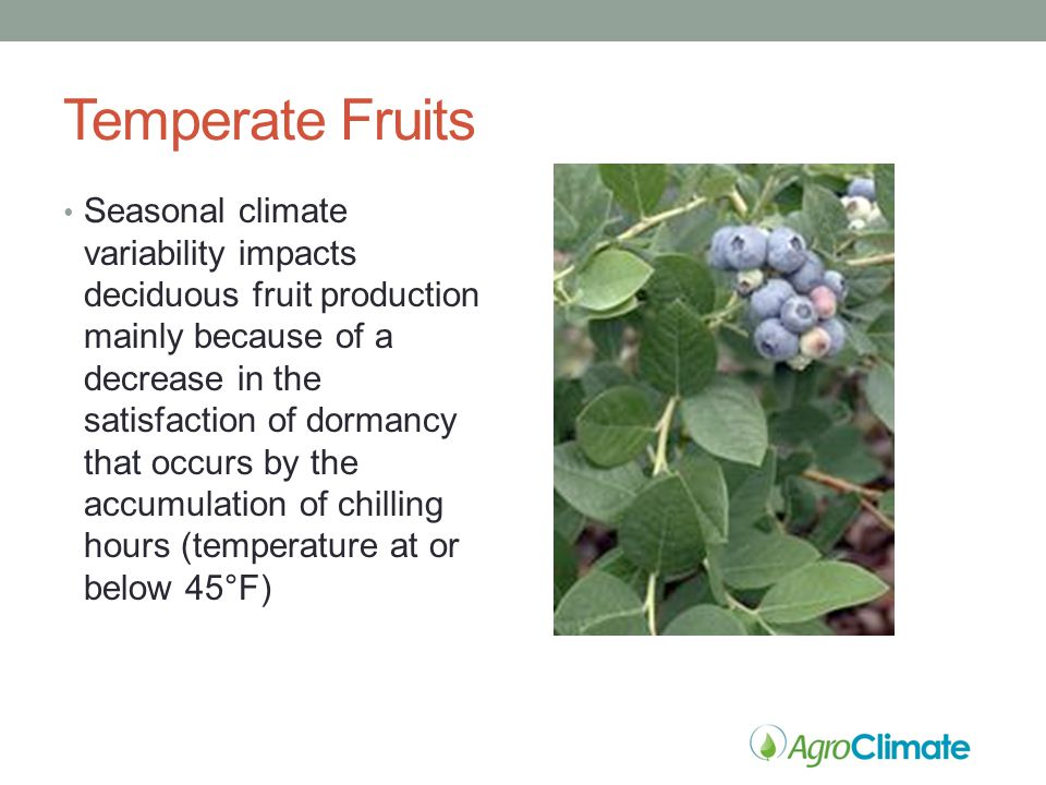 Temperate Fruits Seasonal climate variability impacts deciduous fruit production mainly because of a decrease in the satisfaction of dormancy that occurs by the accumulation of chilling hours (temperature at or below 45°F)