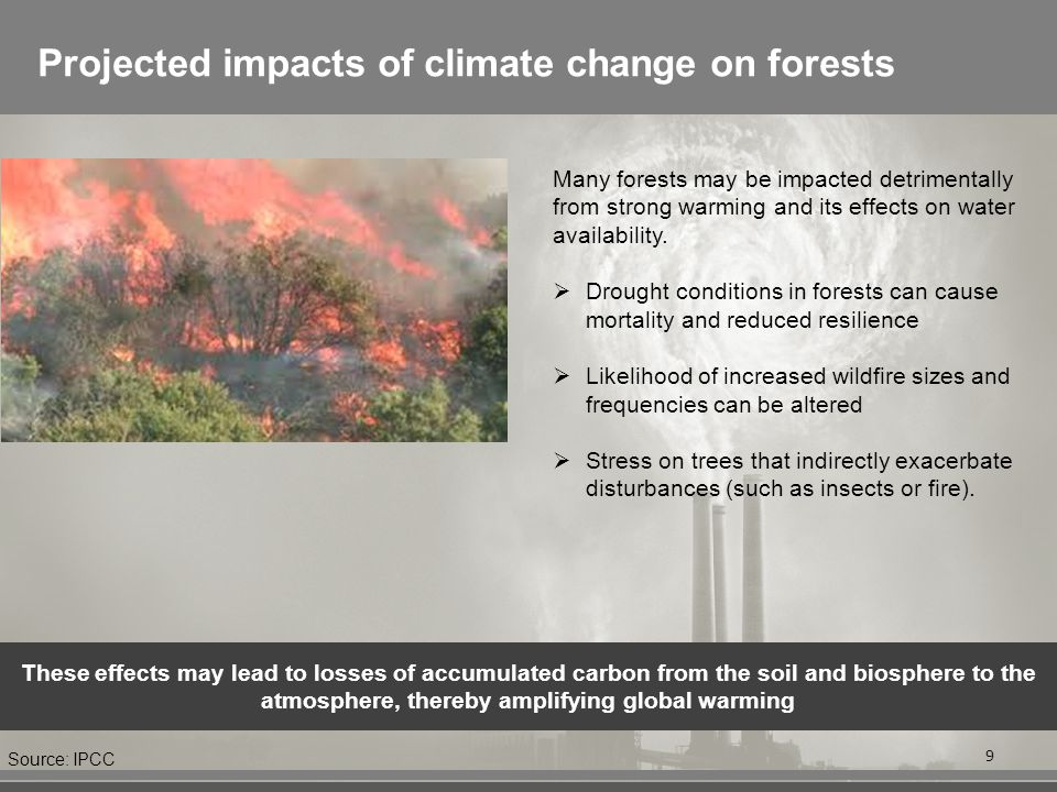 Projected impacts of climate change on forests 9 Many forests may be impacted detrimentally from strong warming and its effects on water availability.