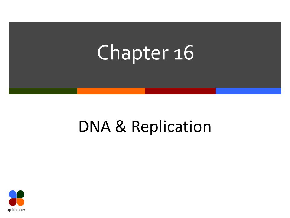 Chapter 16 DNA & Replication