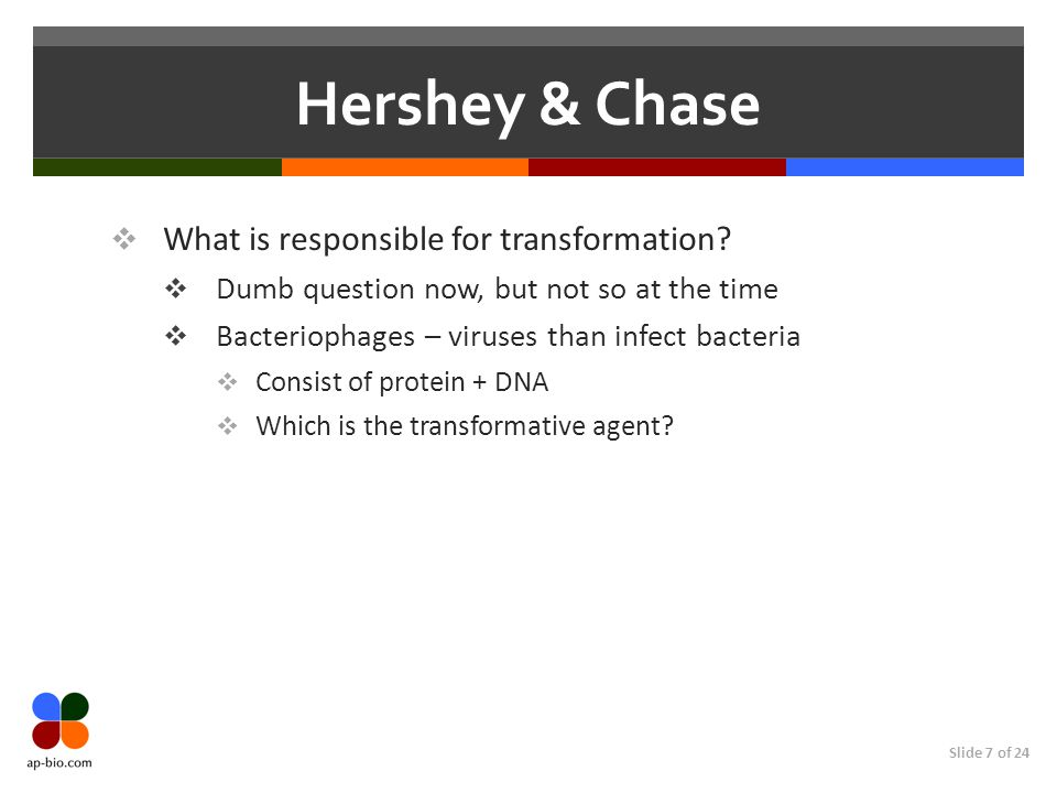 Slide 7 of 24 Hershey & Chase  What is responsible for transformation.