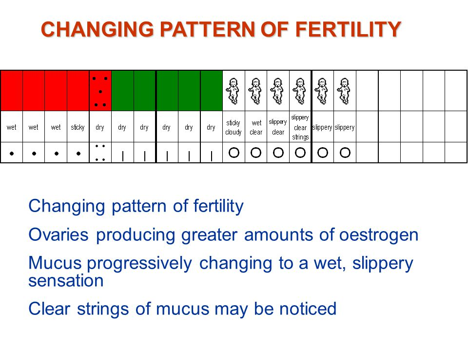 Ovaries are active and are producing oestrogen Cervix is stimulated – fluid mucus is produced, this frees the plug, sperm can now enter cervix Change in vulval sensation or appearance of mucus