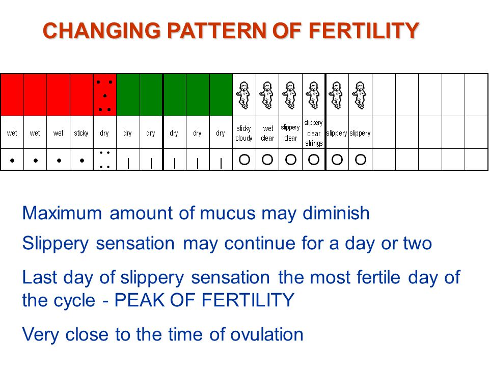 Changing pattern of fertility Ovaries producing greater amounts of oestrogen Mucus progressively changing to a wet, slippery sensation Clear strings of mucus may be noticed CHANGING PATTERN OF FERTILITY
