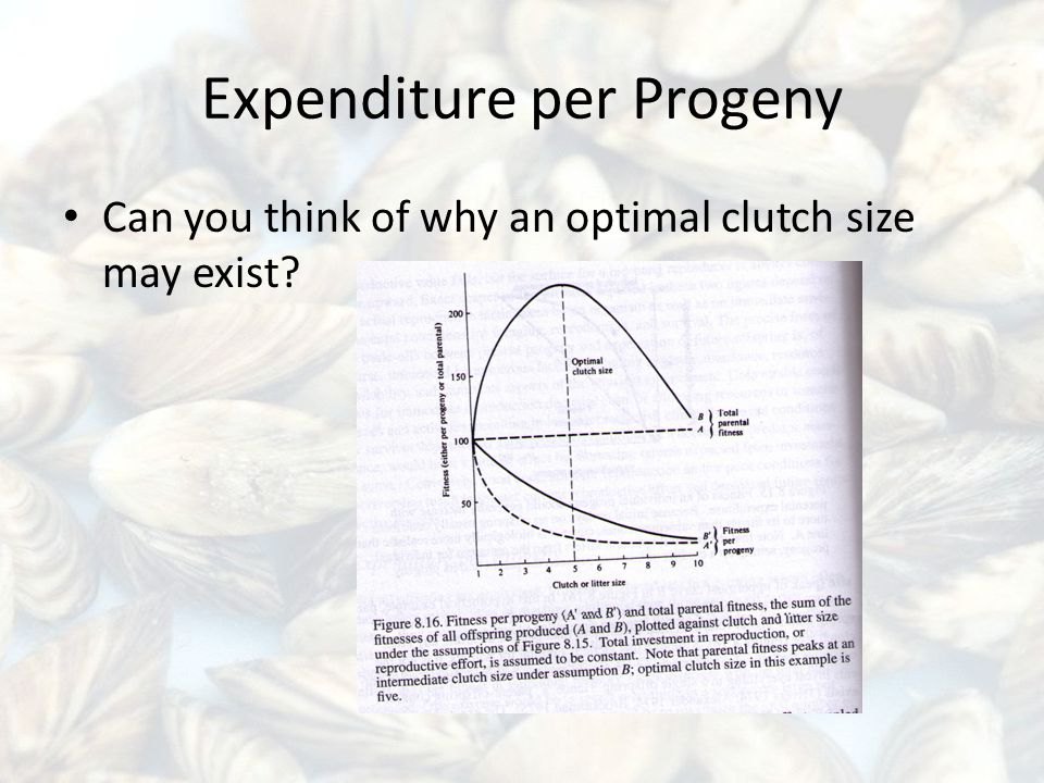 Expenditure per Progeny Can you think of why an optimal clutch size may exist?